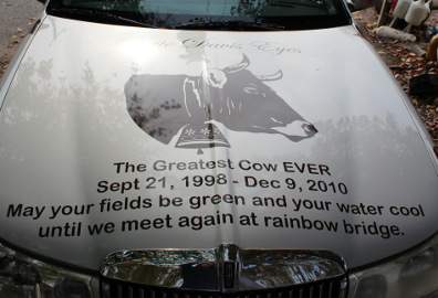 Cow car dedication